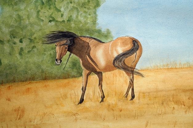 Basking Mustang by Merel Burggraaf http://merelburggraaf.com/
