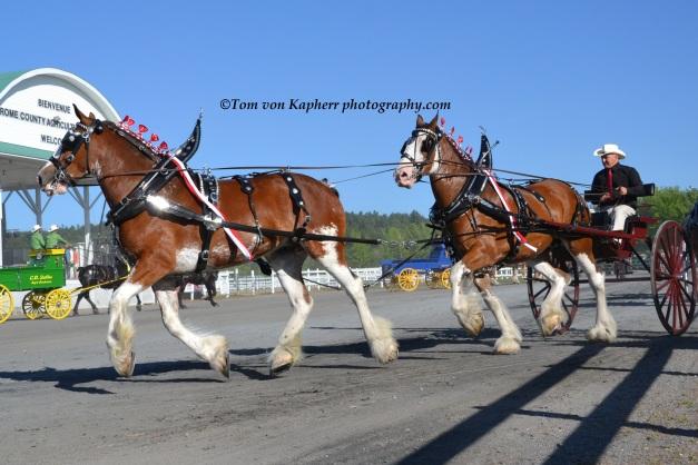 ©Tom von Kapherr photography.com Brome Fair