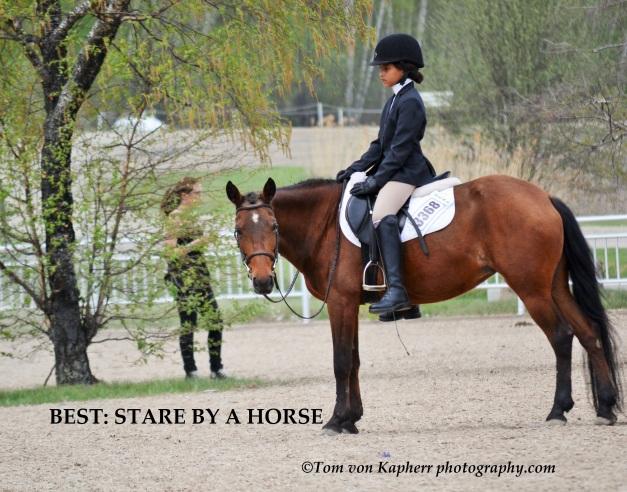 stare horse