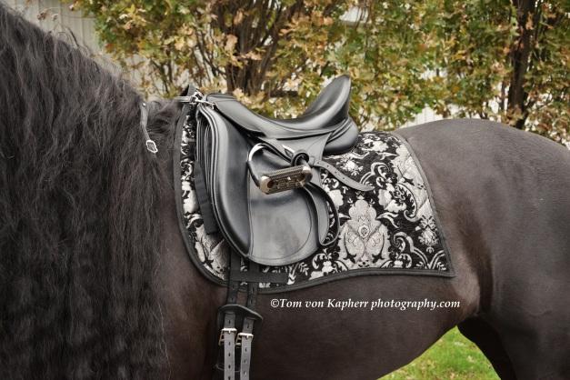saddle - tomvonkapherrphotography.com