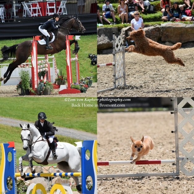Royal Canine - Bromont International - Tom von Kapherr photography