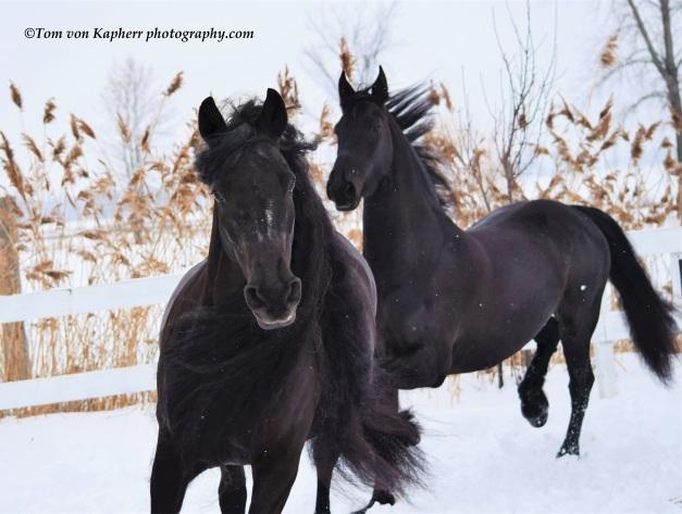 ©Tom von Kapherr photography.com