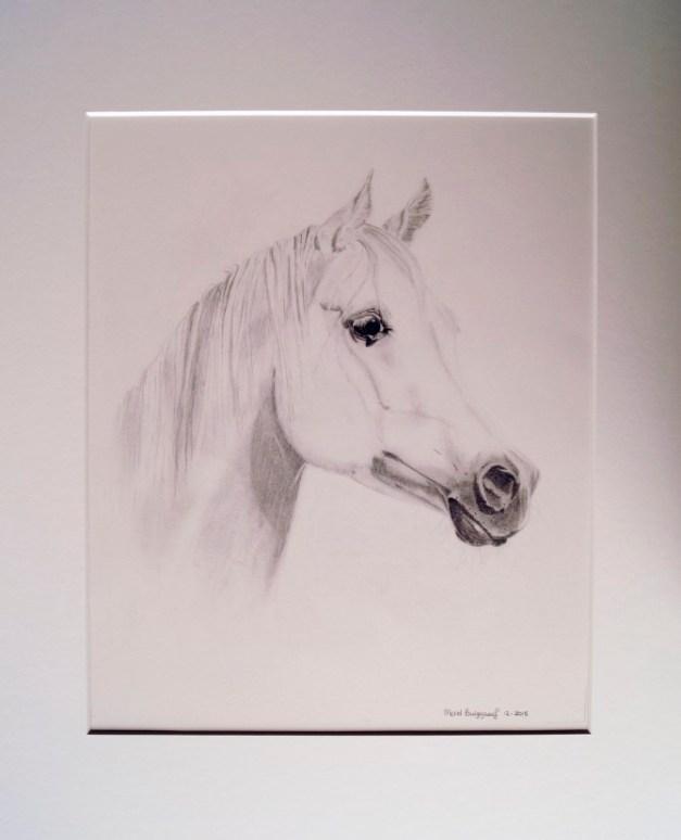 merel-burggraaf-art-paard-equine-horse-painting-drawing-kunst-portret1