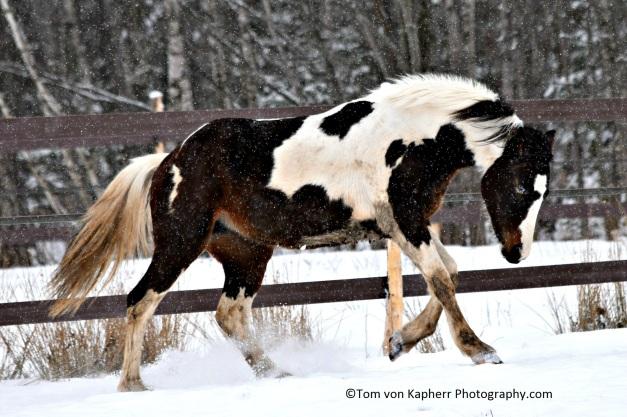 The stampede - ©Tom von Kapherr Photography.com