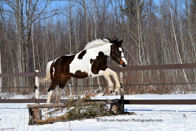 Equestrian Photography tips by ©Tom von Kapherr Photography.com