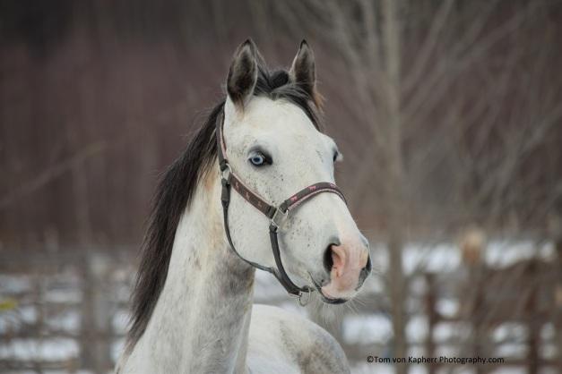 horses, ©Tom von Kapherr Photography.com